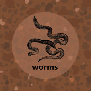 Meadow: Worms